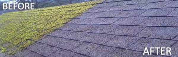 Purley roof moss removal